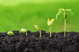 La semilla del Éxito empresarial esta escondida en tu interior